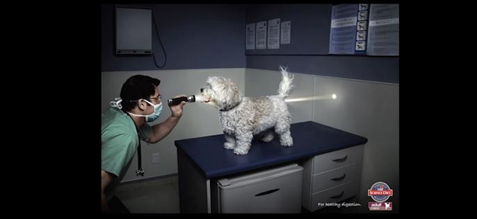 Реклама средства от глистов для собак